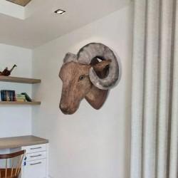 Trofeum barania głowa na ścianę naturalny wygląd